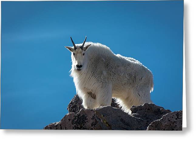 Greeting Card featuring the photograph Mountain Goat 3 by Gary Lengyel