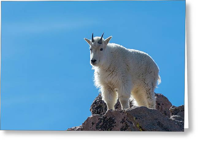 Greeting Card featuring the photograph Mountain Goat 4 by Gary Lengyel