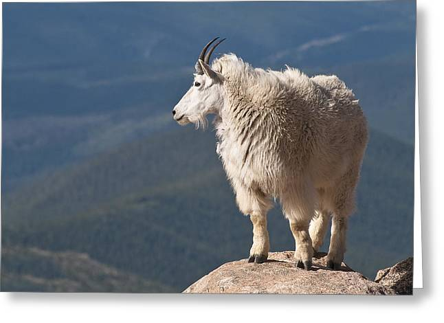 Greeting Card featuring the photograph Mountain Goat by Gary Lengyel