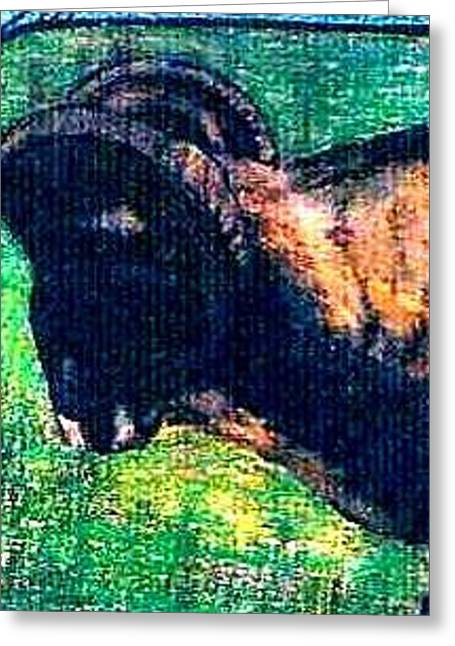 Mountain Goat Greeting Card by Kimberly Simon