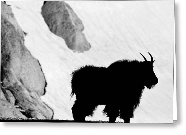 Mountain Goat Shadow Greeting Card
