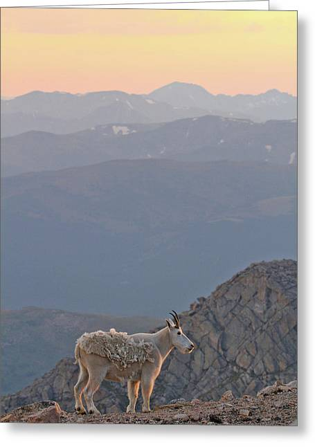 Greeting Card featuring the photograph Mountain Goat Sunset by Scott Mahon