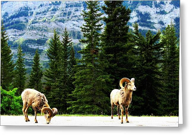 Mountain Goats Greeting Card by Dawn Van Doorn