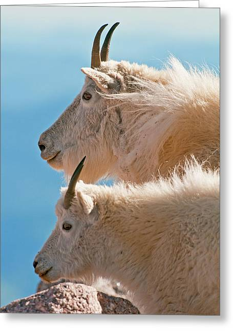 Greeting Card featuring the photograph Mountain Goats by Gary Lengyel
