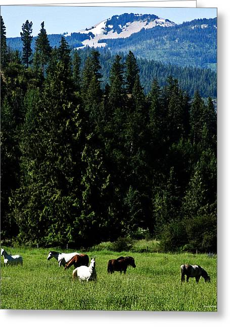 Mountain Herd Greeting Card