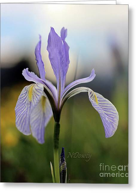 Mountain Iris With Bud Greeting Card