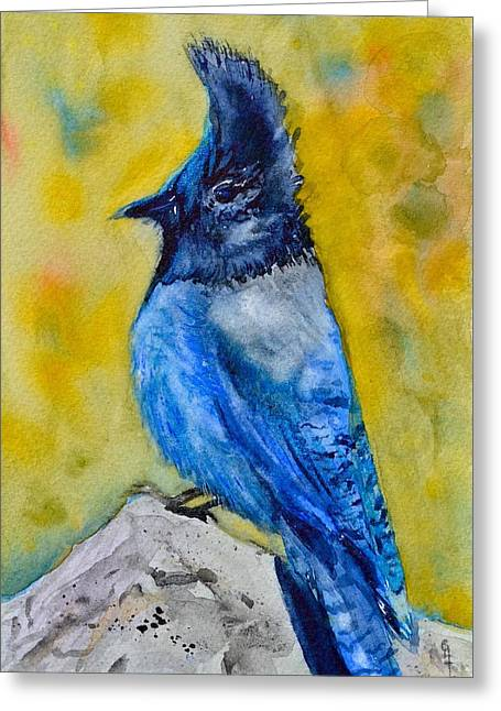Mountain Jay Greeting Card by Beverley Harper Tinsley
