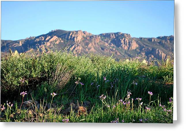 Greeting Card featuring the photograph Mountain Landscape View - Purple Flowers by Matt Harang