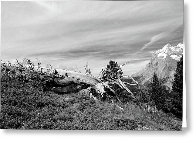 Mountain Landscape With Fallen Tree And View At Alps In Switzerland Greeting Card