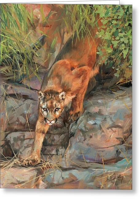 Mountain Lion 2 Greeting Card by David Stribbling