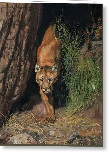 Mountain Lion Emerging From Shadows Greeting Card by David Stribbling