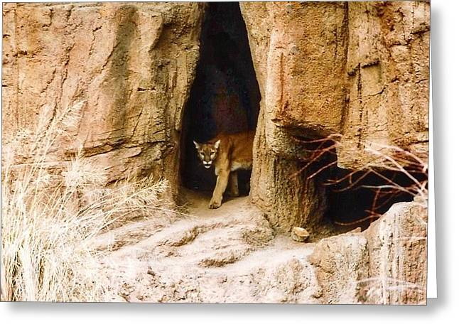 Mountain Lion In The Desert Greeting Card