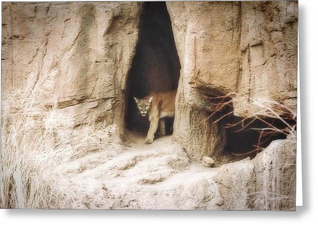 Mountain Lion - Light Greeting Card
