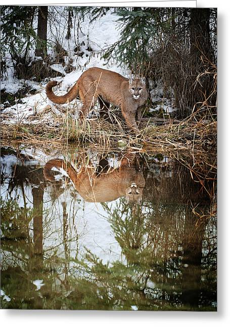 Mountain Lion Reflection Greeting Card