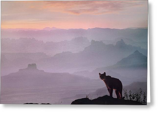 Mountain Lion Greeting Card by Tim Fitzharris