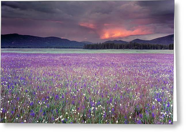 Mountain Meadow Purple Greeting Card by Leland D Howard