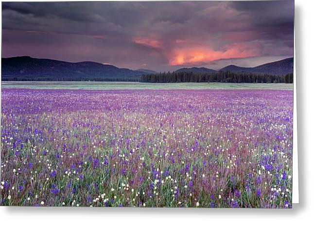 Mountain Meadow Purple Greeting Card