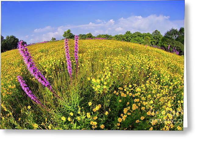 Greeting Card featuring the photograph Mountain Of Summer Flowers In The Blue Ridge by Dan Carmichael