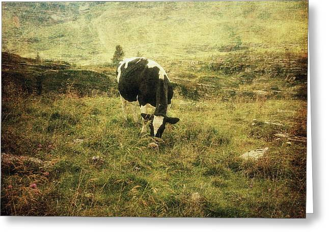 Mountain Pastures  Greeting Card