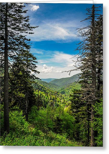 Mountain Pines Greeting Card