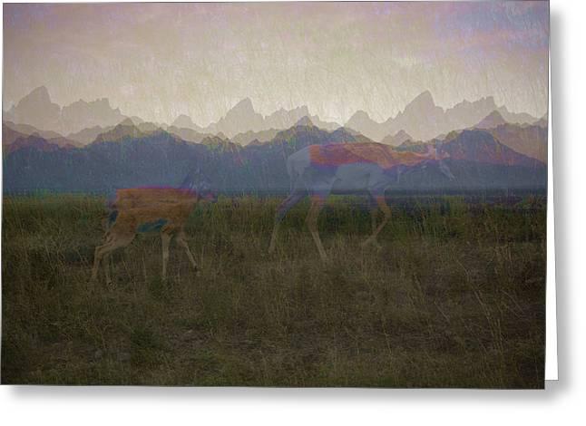Mountain Pronghorns Greeting Card
