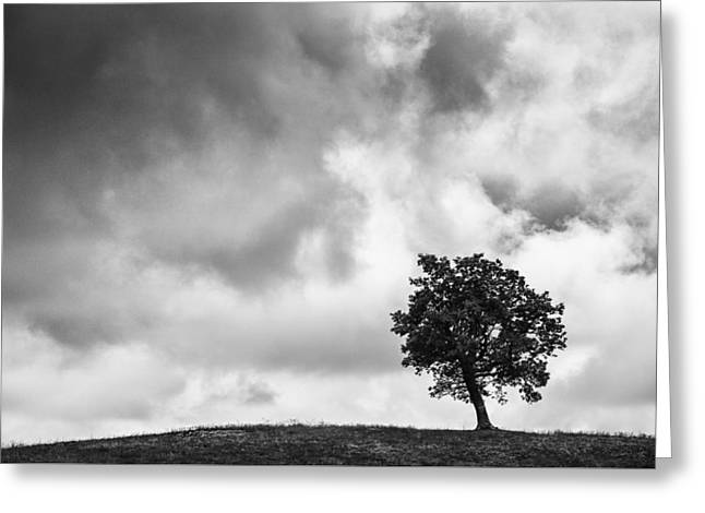Tree On Hill - Doughton Park Blue Ridge Parkway Greeting Card
