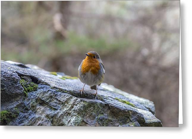 Mountain Robin Greeting Card