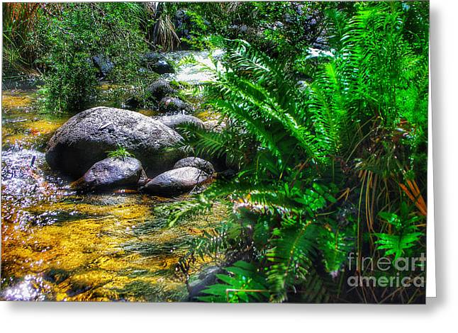 Mountain Stream Greeting Card by Blair Stuart