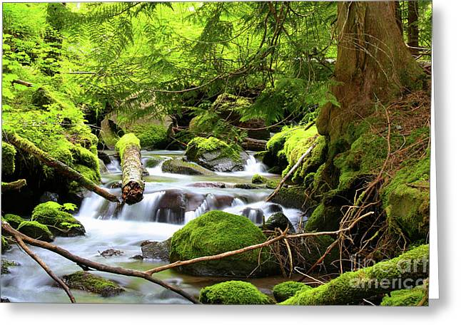 Mountain Stream In The Pacific Northwest Greeting Card