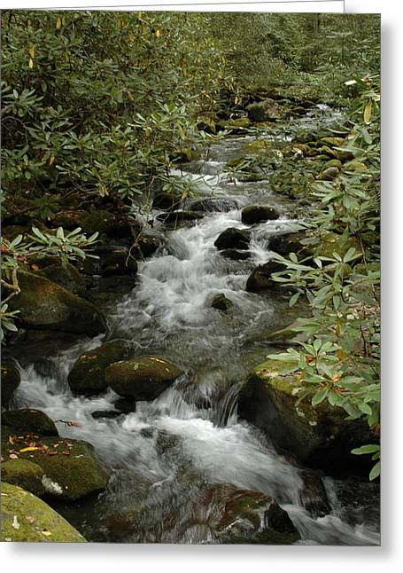 Kathy Schumann Greeting Cards - Mountain Stream Greeting Card by Kathy Schumann
