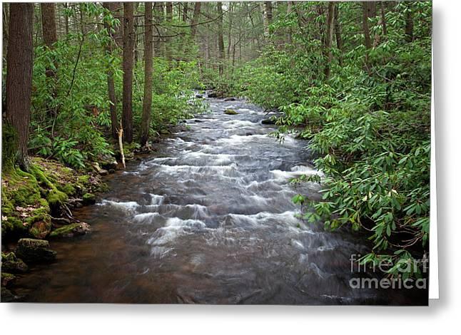 Mountain Stream Laurel Greeting Card by John Stephens
