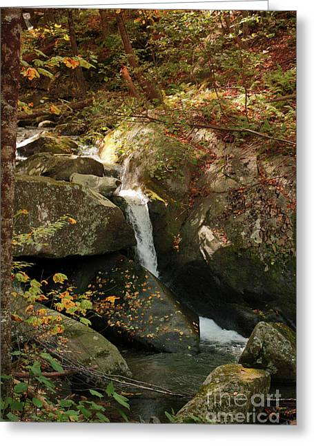 Mountain Stream Greeting Card by Rebecca Davis