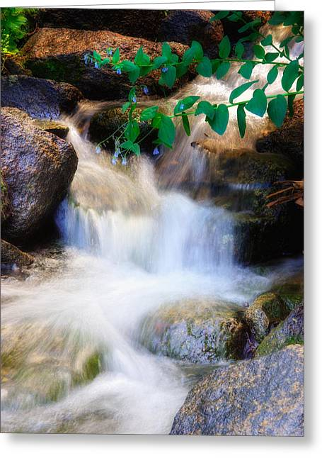 Mountain Stream Wasatch Mts. Utah Greeting Card by Utah Images