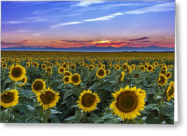 Mountain Sunset Over Sunflower Fields Greeting Card by Teri Virbickis