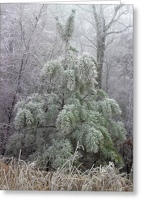 Mountain Top Frost Greeting Card by Mike Eingle