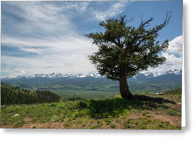 Mountain Tree Greeting Card by Aaron Spong