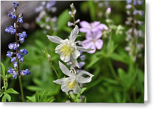 Mountain Wildflowers Greeting Card by Greg Norrell