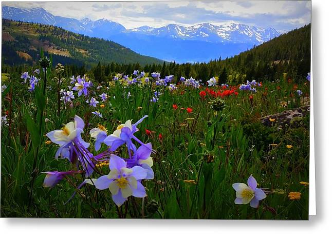 Greeting Card featuring the photograph Mountain Wildflowers by Karen Shackles