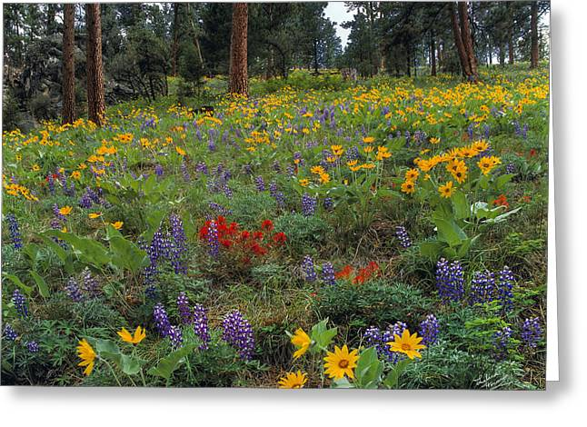 Mountain Wildflowers Greeting Card by Leland D Howard