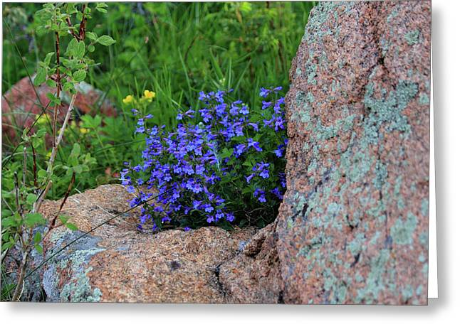 Greeting Card featuring the photograph Mountain Wildflowers by Shane Bechler