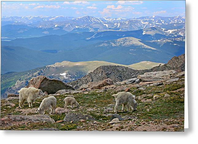 Mountains And Goats Greeting Card