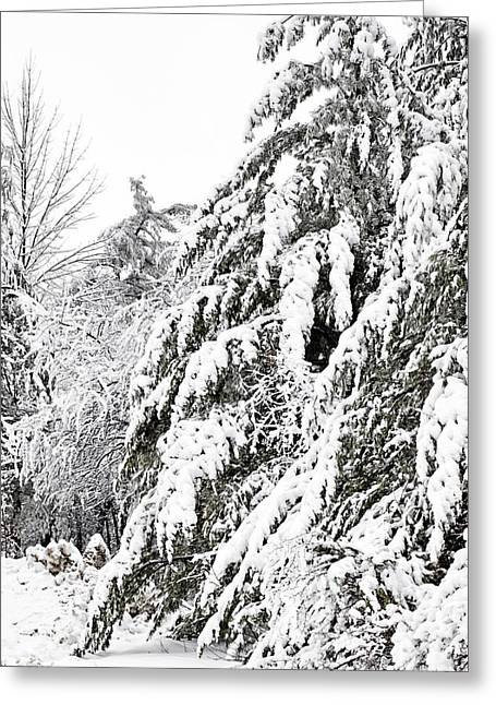 Mourn The Winter Greeting Card
