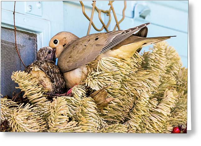 Mourning Dove And Chick Greeting Card by Steven Ralser