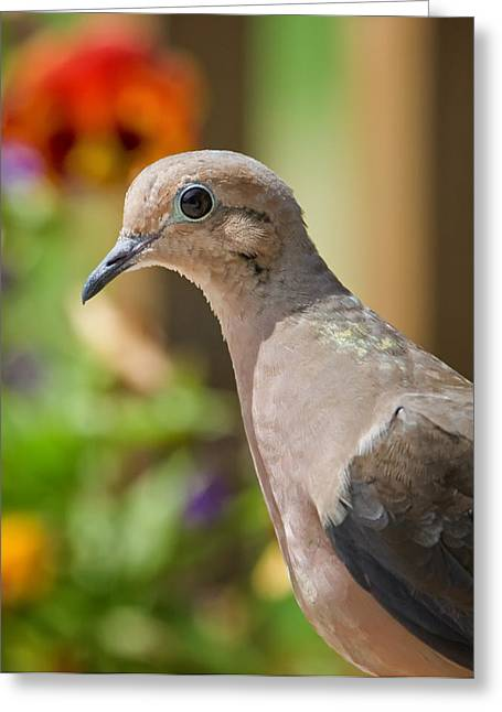 Mourning Dove And Flowers Greeting Card