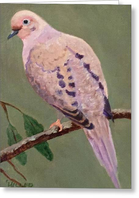 Mourning Dove Greeting Card by Linda Hiller