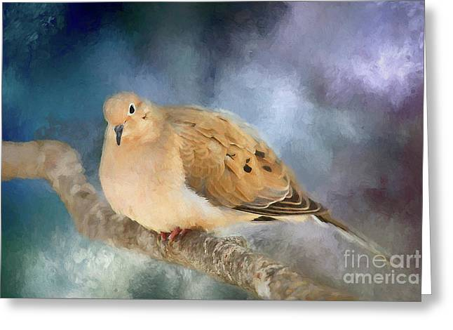 Mourning Dove Of Winter Greeting Card by Darren Fisher