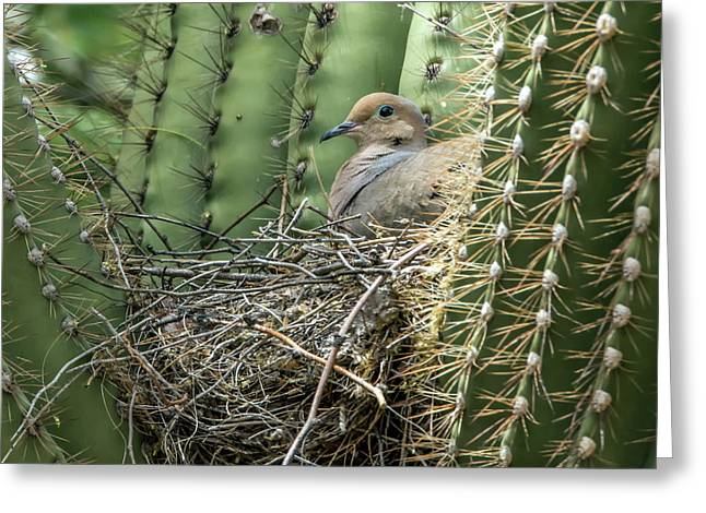 Mourning Dove On Nest 7693 Greeting Card by Tam Ryan