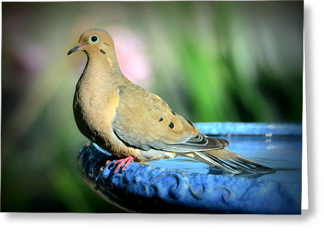 Mourning Dove Perched Greeting Card