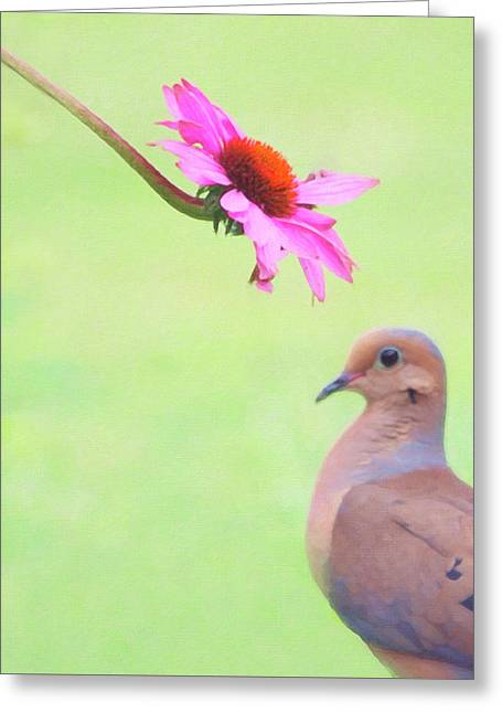 Greeting Card featuring the photograph Mourning Dove by Sue Collura