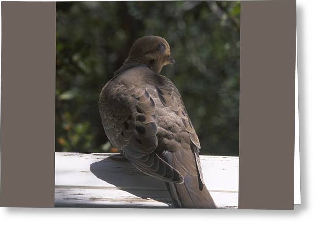 Mourning Dove - Tillie Creek Greeting Card by Soli Deo Gloria Wilderness And Wildlife Photography